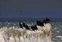 Noclegi Ustronie Morskie | Zdjęcia przyrody